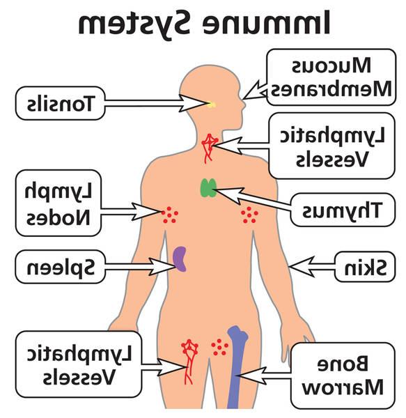 the immune system parham
