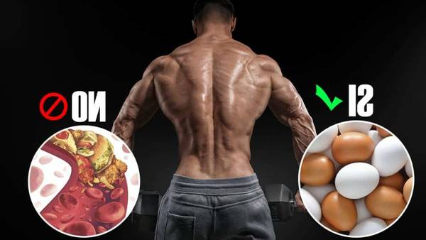 40% masa muscular